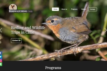 Birdwatching Chile, aventuras de Humboldt Current Birdwatching